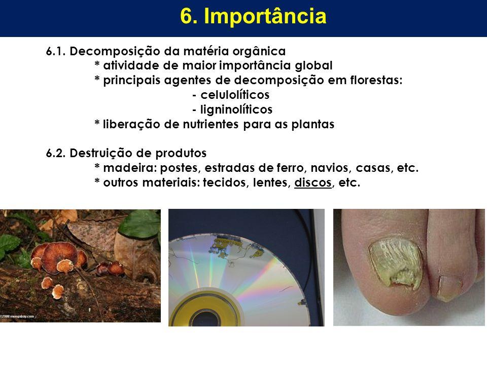 6.1. Decomposição da matéria orgânica * atividade de maior importância global * principais agentes de decomposição em florestas: - celulolíticos - lig