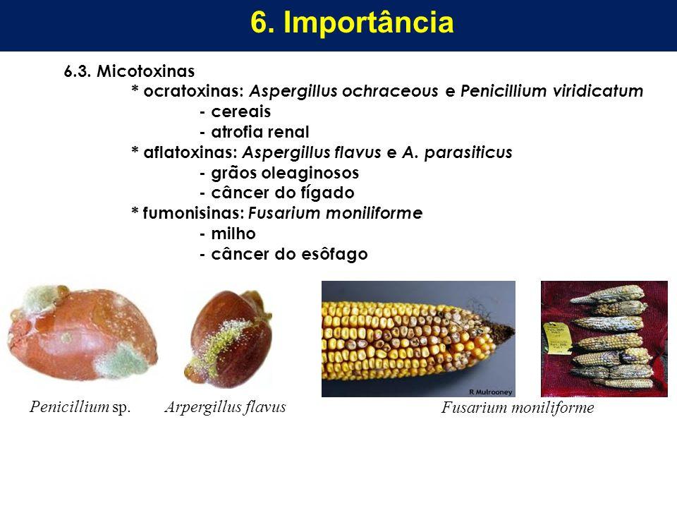 6.3. Micotoxinas * ocratoxinas: Aspergillus ochraceous e Penicillium viridicatum - cereais - atrofia renal * aflatoxinas: Aspergillus flavus e A. para