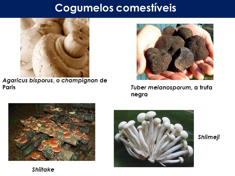 Agaricus bisporus, o champignon de Paris Tuber melanosporum, a trufa negra Cogumelos comestíveis Shiitake Shiimeji