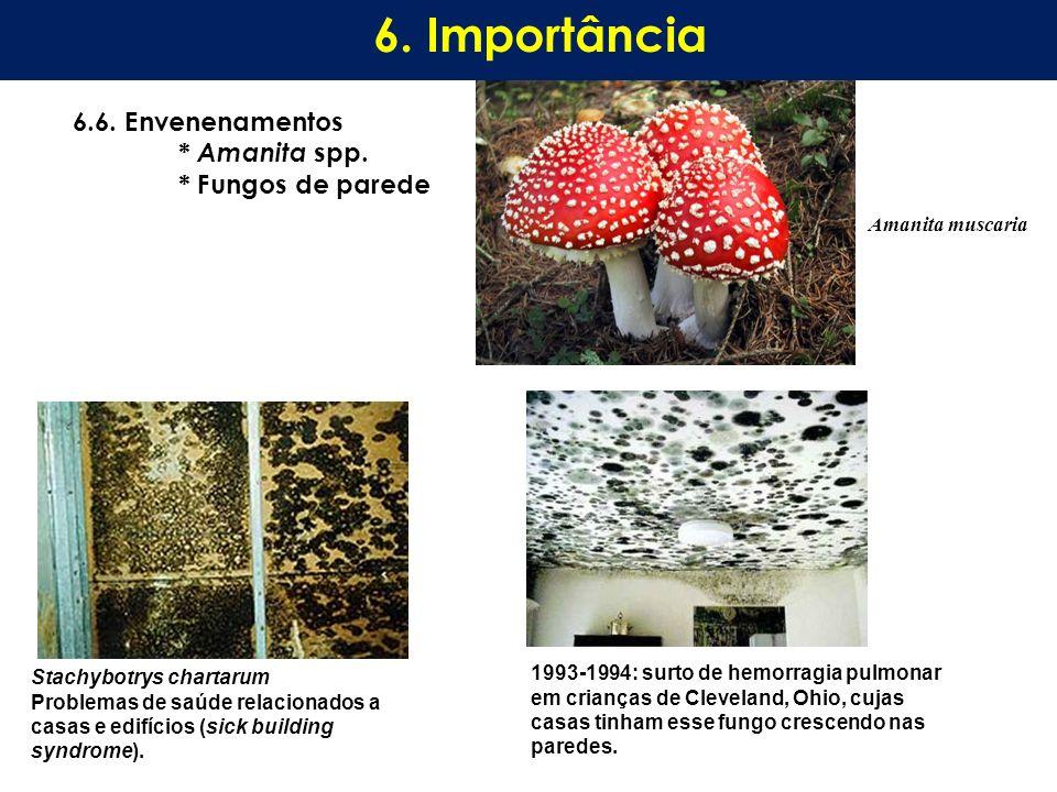 6.6. Envenenamentos * Amanita spp. * Fungos de parede 6. Importância Stachybotrys chartarum Problemas de saúde relacionados a casas e edifícios (sick