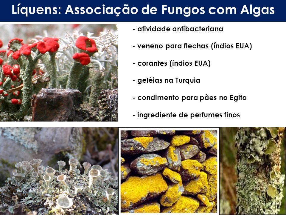 Líquens: Associação de Fungos com Algas - atividade antibacteriana - veneno para flechas (índios EUA) - corantes (índios EUA) - geléias na Turquia - c