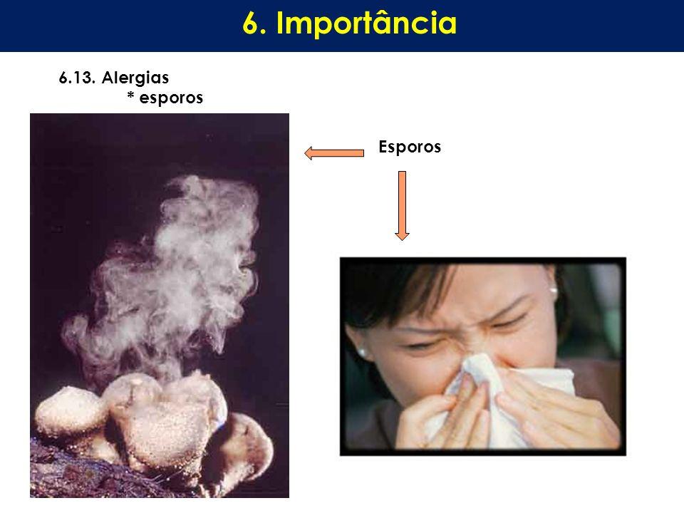 6.13. Alergias * esporos 6. Importância Esporos