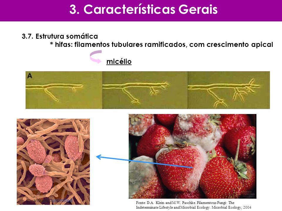 3.7. Estrutura somática * hifas: filamentos tubulares ramificados, com crescimento apical micélio 3. Características Gerais Fonte: D.A. Klein and M.W.