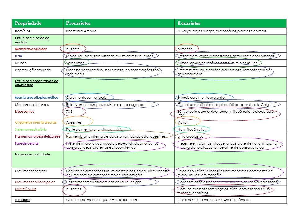 PropriedadeProcariotosEucariotos Domínios Bacteria e ArchaeEukarya: algas, fungos, protozoários, plantas e animais Estrutura e função do núcleo Membra