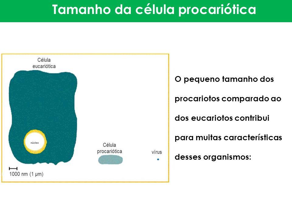 Tamanho da célula procariótica O pequeno tamanho dos procariotos comparado ao dos eucariotos contribui para muitas características desses organismos: