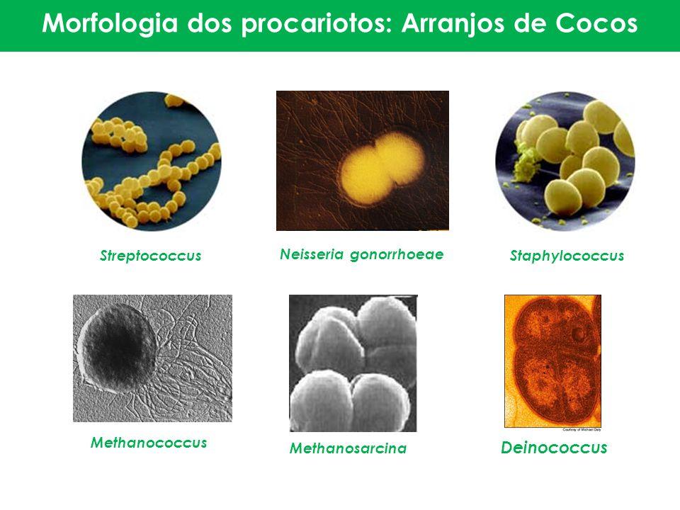 Streptococcus Neisseria gonorrhoeae Staphylococcus Methanococcus Methanosarcina Deinococcus Morfologia dos procariotos: Arranjos Morfologia dos procar