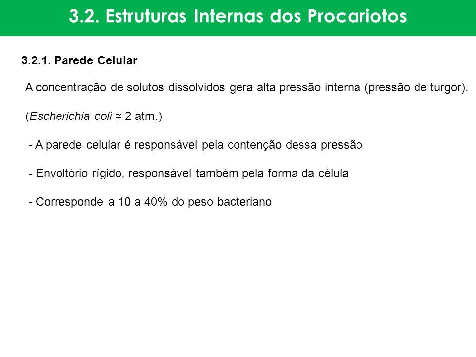 3.2. Estruturas Internas dos Procariotos 3.2.1. Parede Celular A concentração de solutos dissolvidos gera alta pressão interna (pressão de turgor). (E