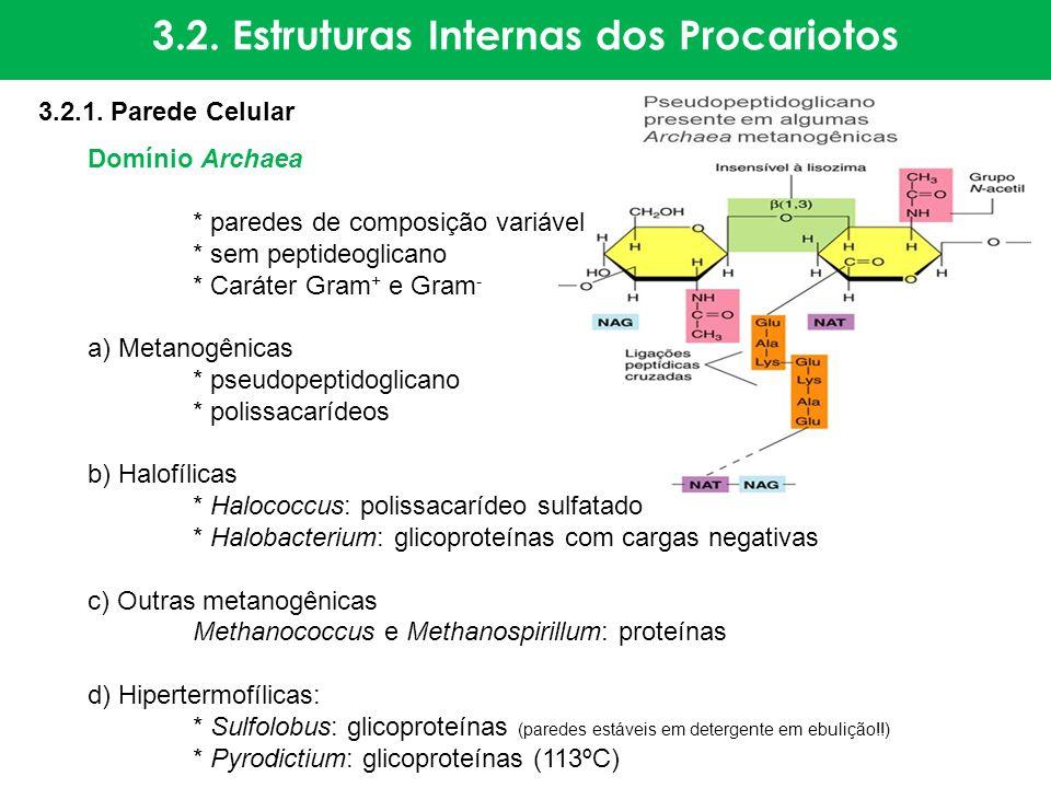 Domínio Archaea * paredes de composição variável * sem peptideoglicano * Caráter Gram + e Gram - a) Metanogênicas * pseudopeptidoglicano * polissacarí