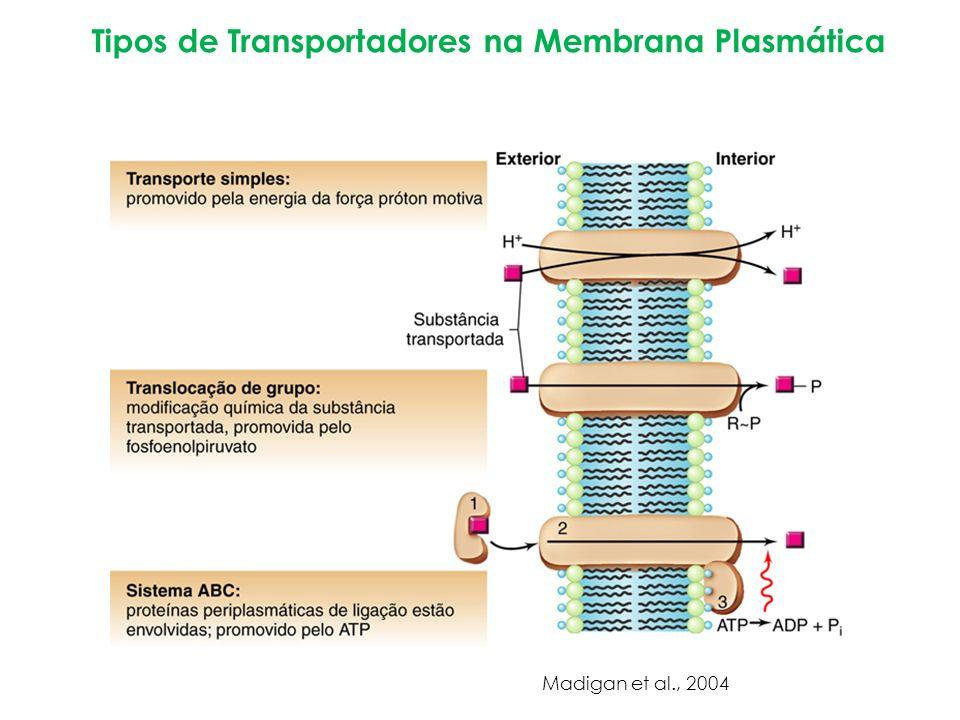 Tipos de Transportadores na Membrana Plasmática Madigan et al., 2004