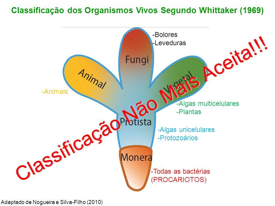 Classificação dos Organismos Vivos Segundo Whittaker (1969) -Algas multicelulares -Plantas -Animais -Algas unicelulares -Protozoários -Bolores -Levedu