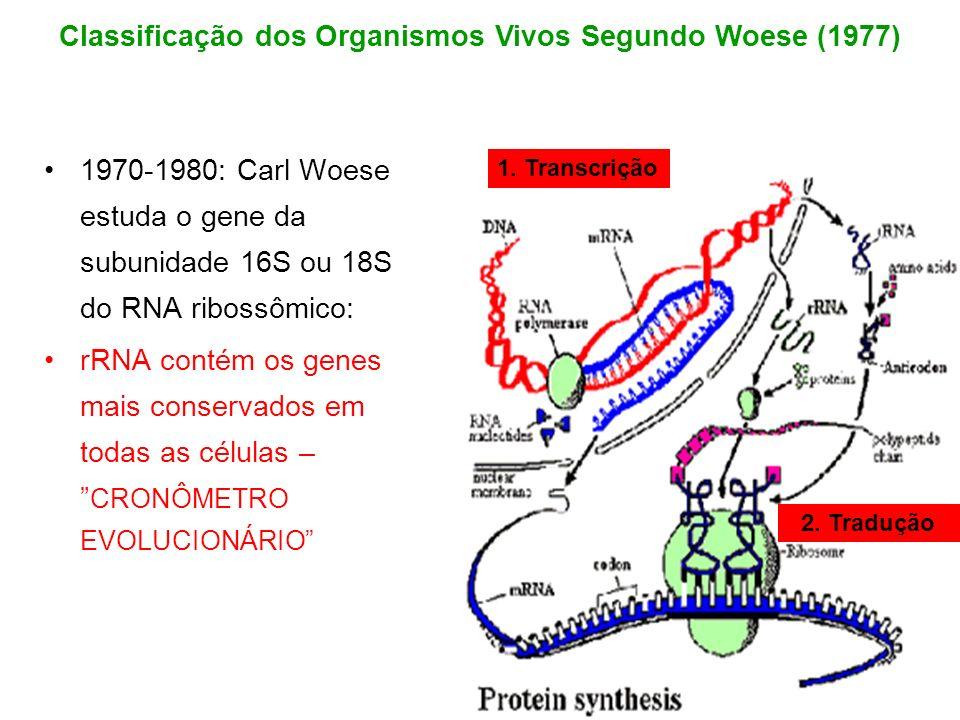1970-1980: Carl Woese estuda o gene da subunidade 16S ou 18S do RNA ribossômico: rRNA contém os genes mais conservados em todas as células – CRONÔMETR