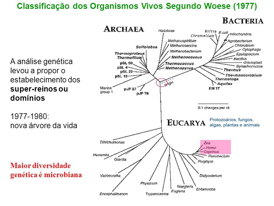 Maior diversidade genética é microbiana A análise genética levou a propor o estabelecimento dos super-reinos ou domínios 1977-1980: nova árvore da vid