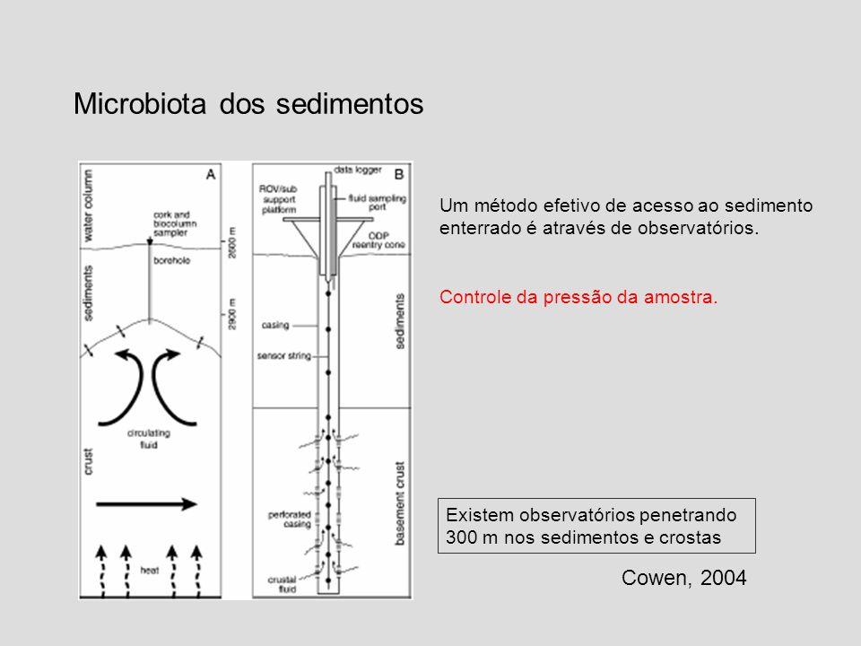 Microbiota dos sedimentos Cowen, 2004 Existem observatórios penetrando 300 m nos sedimentos e crostas Um método efetivo de acesso ao sedimento enterra