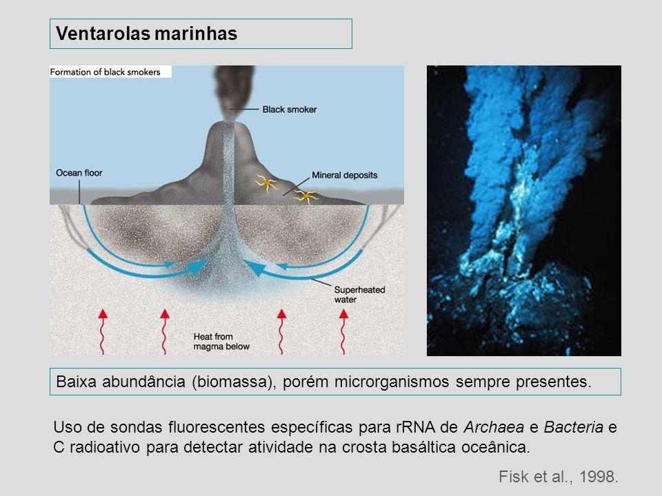 Baixa abundância (biomassa), porém microrganismos sempre presentes. Ventarolas marinhas Uso de sondas fluorescentes específicas para rRNA de Archaea e