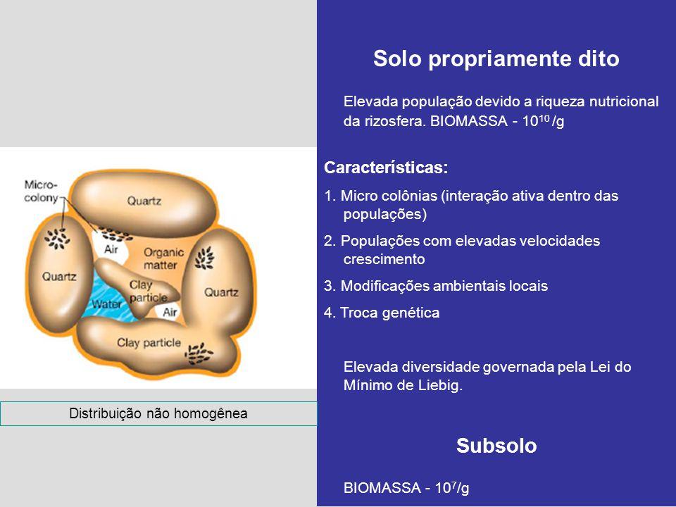Solo propriamente dito Elevada população devido a riqueza nutricional da rizosfera. BIOMASSA - 10 10 /g Características: 1. Micro colônias (interação