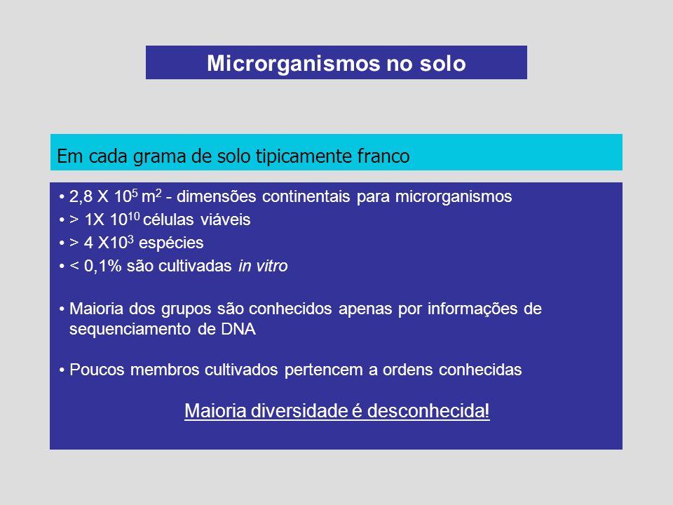 Microrganismos no solo Em cada grama de solo tipicamente franco 2,8 X 10 5 m 2 - dimensões continentais para microrganismos > 1X 10 10 células viáveis