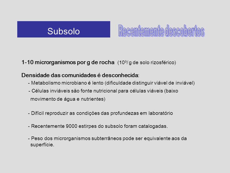 1-10 microrganismos por g de rocha (10 9 / g de solo rizosférico) Densidade das comunidades é desconhecida : - Metabolismo microbiano é lento (dificul