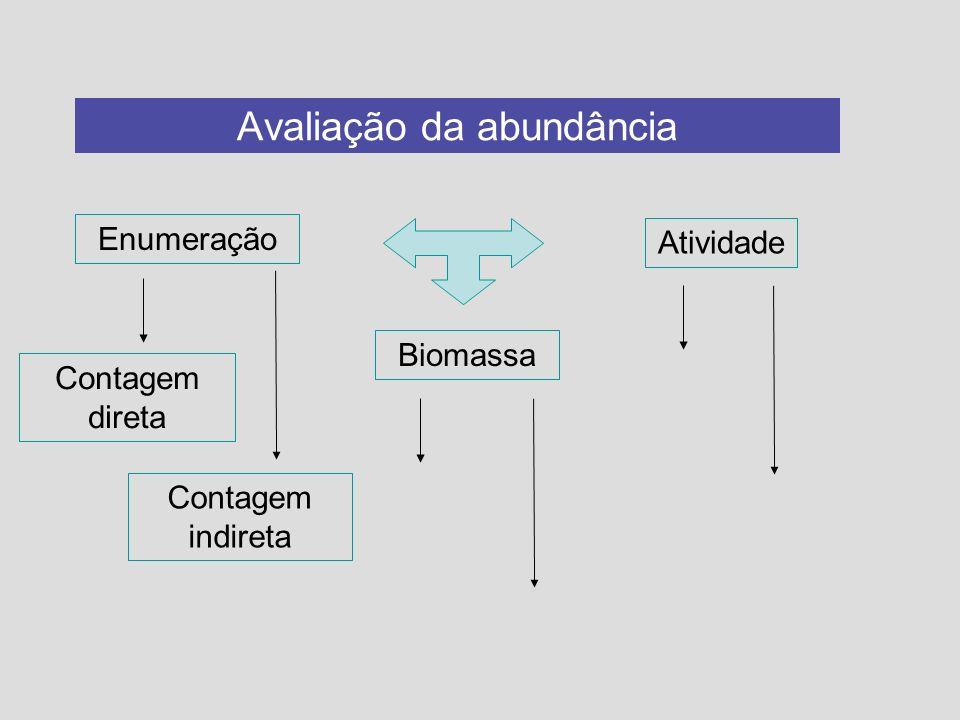 Avaliação da abundância Enumeração Biomassa Atividade Contagem direta Contagem indireta