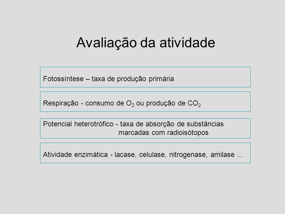 Avaliação da atividade Fotossíntese – taxa de produção primária Respiração - consumo de O 2 ou produção de CO 2 Potencial heterotrófico - taxa de abso