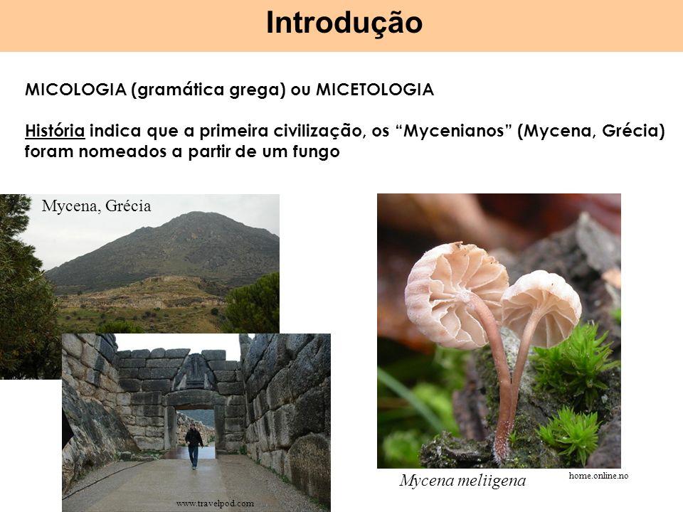 Introdução MICOLOGIA (gramática grega) ou MICETOLOGIA História indica que a primeira civilização, os Mycenianos (Mycena, Grécia) foram nomeados a part