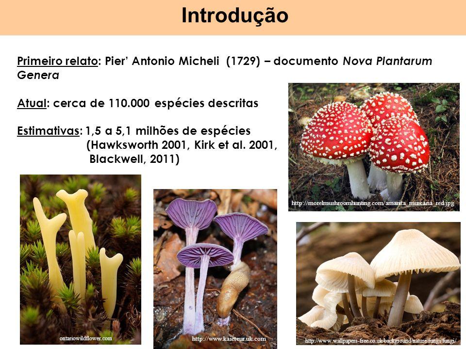 Introdução Primeiro relato: Pier Antonio Micheli (1729) – documento Nova Plantarum Genera Atual: cerca de 110.000 espécies descritas Estimativas: 1,5