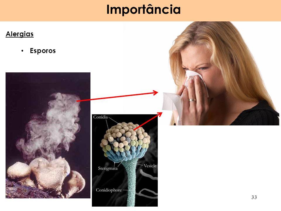 Importância 33 Alergias Esporos