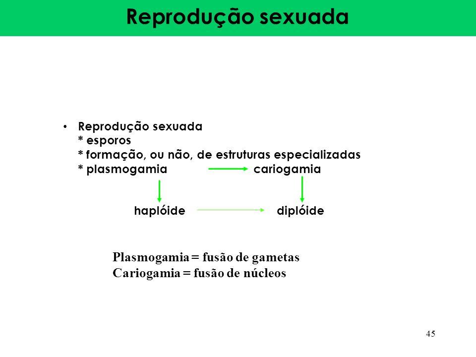 Reprodução sexuada * esporos * formação, ou não, de estruturas especializadas * plasmogamiacariogamia haplóide diplóide 45 Plasmogamia = fusão de game