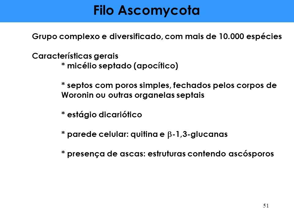 Filo Ascomycota Grupo complexo e diversificado, com mais de 10.000 espécies Características gerais * micélio septado (apocítico) * septos com poros si