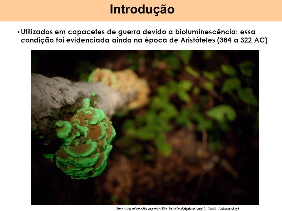 Bioluminescência: reações dependentes do O 2 envolvendo substratos genericamente denominados de luciferans, catalisado por enzimas chamadas luciferases A interação entre os compostos gera produtos químicos instáveis A medida que são decompostos energia é liberada em forma de luz esverdeada (520-530 nm) Tanto hifas quanto corpos de frutificação (especialmente esporos) emitem luz Comprovado em mais de 50 espécies de fungos, algumas onde a luz pode ser vista a mais de 40 metros, enquanto outros é possível ler à luz emitida pelos mesmos Introdução