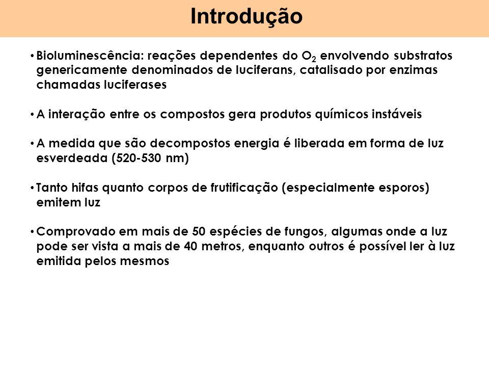 Simbiontes * ectomicorrizas * micorrizas arbusculares * endófitos * artrópodes * líquens Importância 29