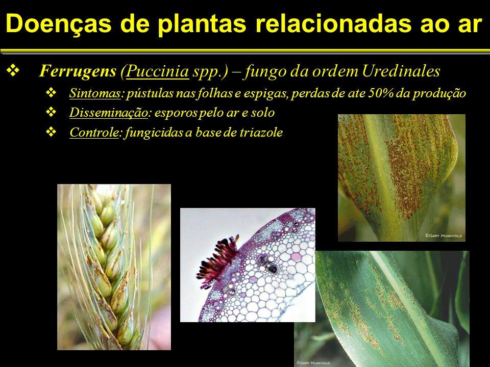 Doenças de plantas relacionadas ao ar Ferrugens (Puccinia spp.) – fungo da ordem Uredinales Sintomas: pústulas nas folhas e espigas, perdas de ate 50% da produção Disseminação: esporos pelo ar e solo Controle: fungicidas a base de triazole