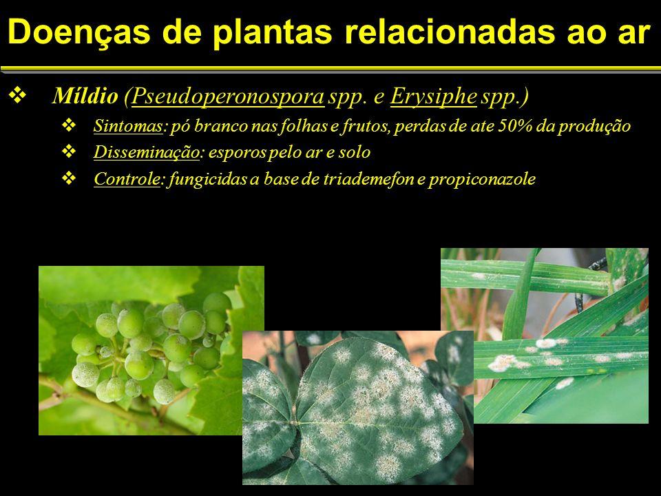Míldio (Pseudoperonospora spp.