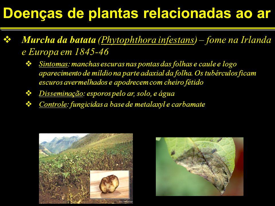 Murcha da batata (Phytophthora infestans) – fome na Irlanda e Europa em 1845-46 Sintomas: manchas escuras nas pontas das folhas e caule e logo aparecimento de míldio na parte adaxial da folha.
