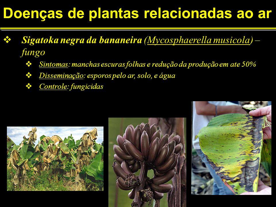 Sigatoka negra da bananeira (Mycosphaerella musicola) – fungo Sintomas: manchas escuras folhas e redução da produção em ate 50% Disseminação: esporos pelo ar, solo, e água Controle: fungicidas Doenças de plantas relacionadas ao ar