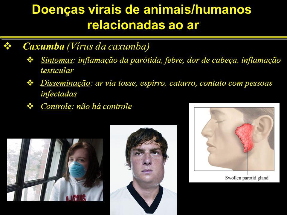 Caxumba (Vírus da caxumba) Sintomas: inflamação da parótida, febre, dor de cabeça, inflamação testicular Disseminação: ar via tosse, espirro, catarro, contato com pessoas infectadas Controle: não há controle Doenças virais de animais/humanos relacionadas ao ar