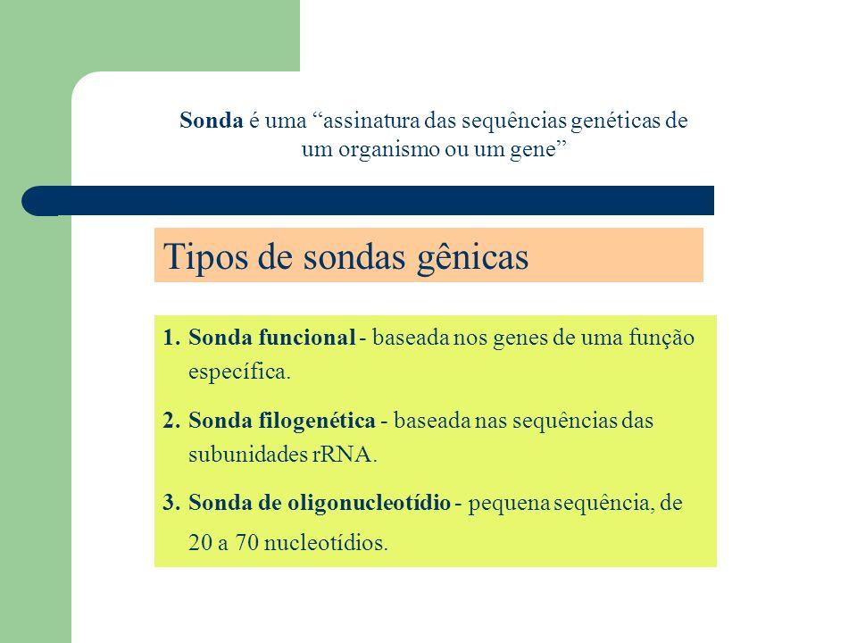 1.Sonda funcional - baseada nos genes de uma função específica. 2.Sonda filogenética - baseada nas sequências das subunidades rRNA. 3.Sonda de oligonu