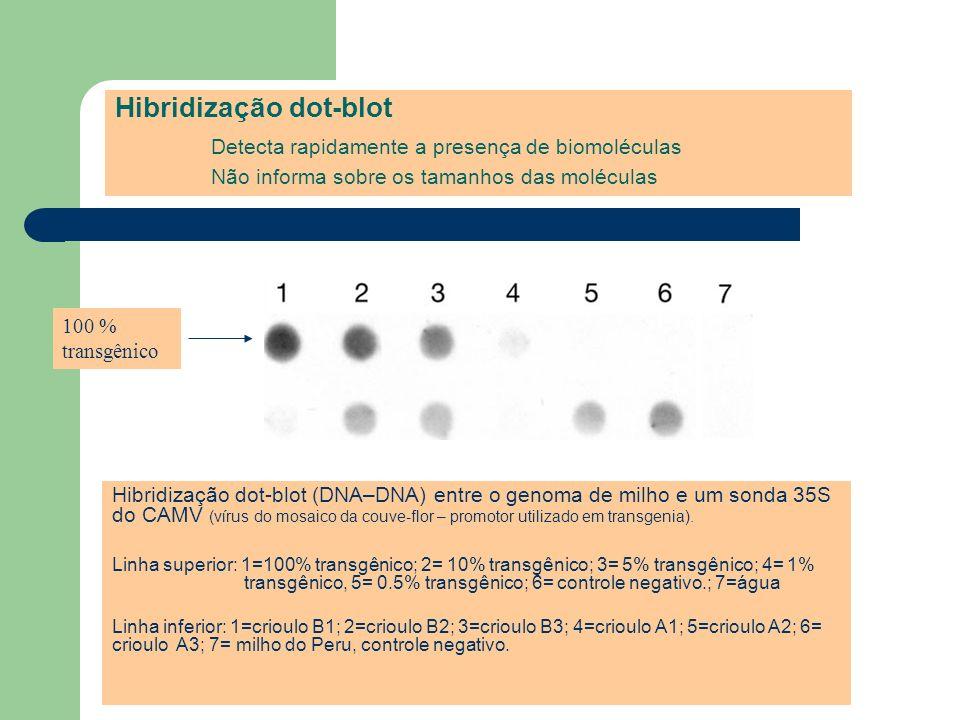 Hibridização dot-blot Detecta rapidamente a presença de biomoléculas Não informa sobre os tamanhos das moléculas Hibridização dot-blot (DNA–DNA) entre