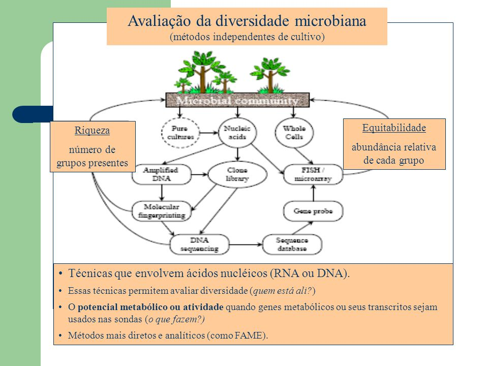 Avaliação da diversidade microbiana (métodos independentes de cultivo) Riqueza número de grupos presentes Equitabilidade abundância relativa de cada g