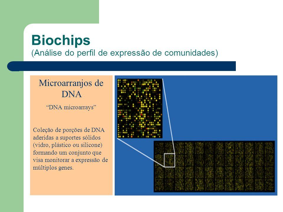Biochips (Análise do perfil de expressão de comunidades) Microarranjos de DNA DNA microarrays Coleção de porções de DNA aderidas a suportes sólidos (v