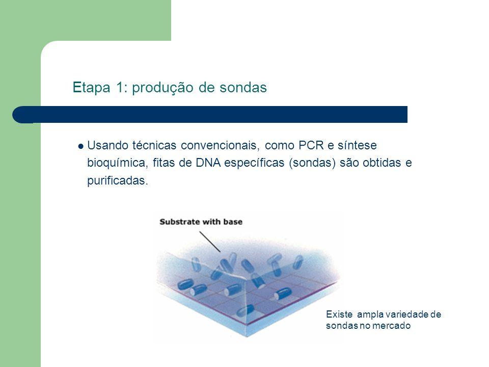 Etapa 1: produção de sondas Usando técnicas convencionais, como PCR e síntese bioquímica, fitas de DNA específicas (sondas) são obtidas e purificadas.