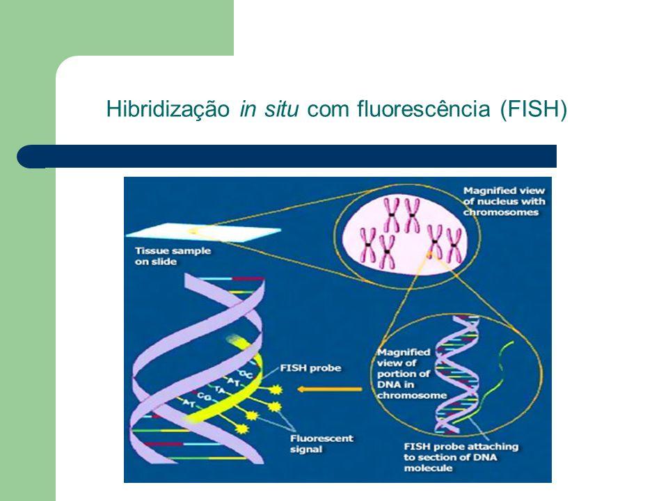 Hibridização in situ com fluorescência (FISH)