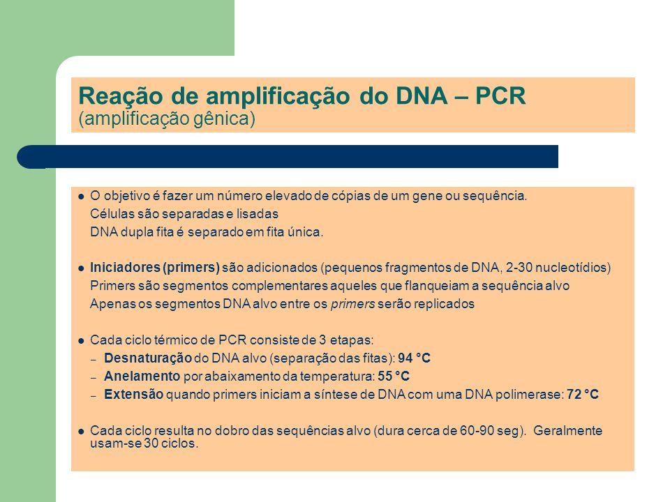 Reação de amplificação do DNA – PCR (amplificação gênica) O objetivo é fazer um número elevado de cópias de um gene ou sequência. Células são separada