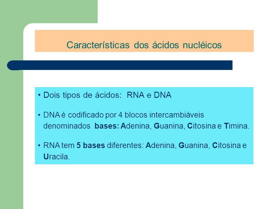 Características dos ácidos nucléicos Dois tipos de ácidos: RNA e DNA DNA é codificado por 4 blocos intercambiáveis denominados bases: Adenina, Guanina