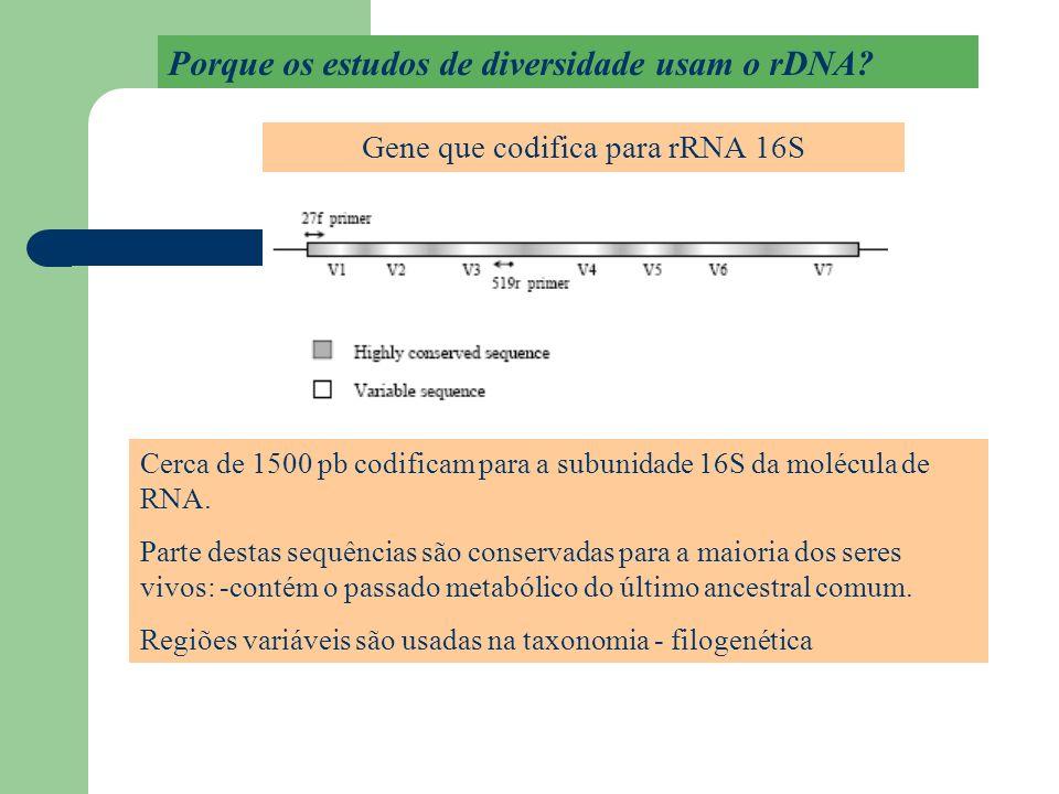 Mapa de variabilidade de SSU rDNA bacteriano Vermelho = genes altamente conservados Estrutura primária (sequência) e secundária (laços e dobraduras) ordenam a estrutura terciária (3D) dos ribossomos.