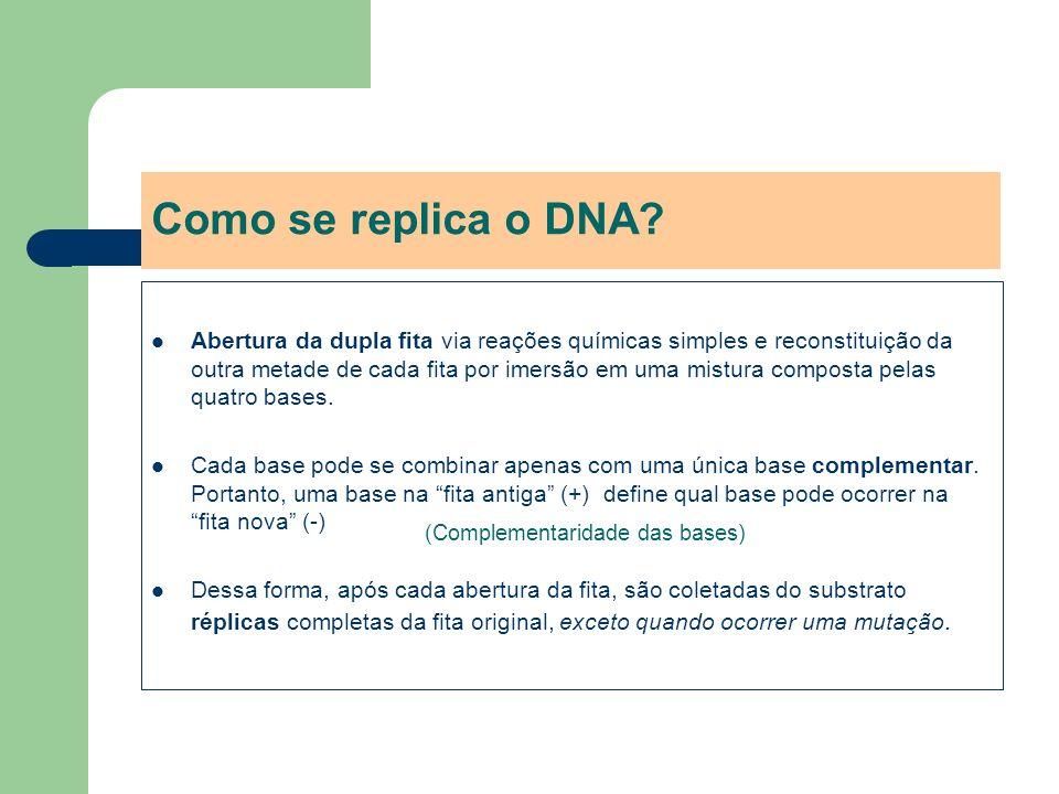 Como se replica o DNA? Abertura da dupla fita via reações químicas simples e reconstituição da outra metade de cada fita por imersão em uma mistura co