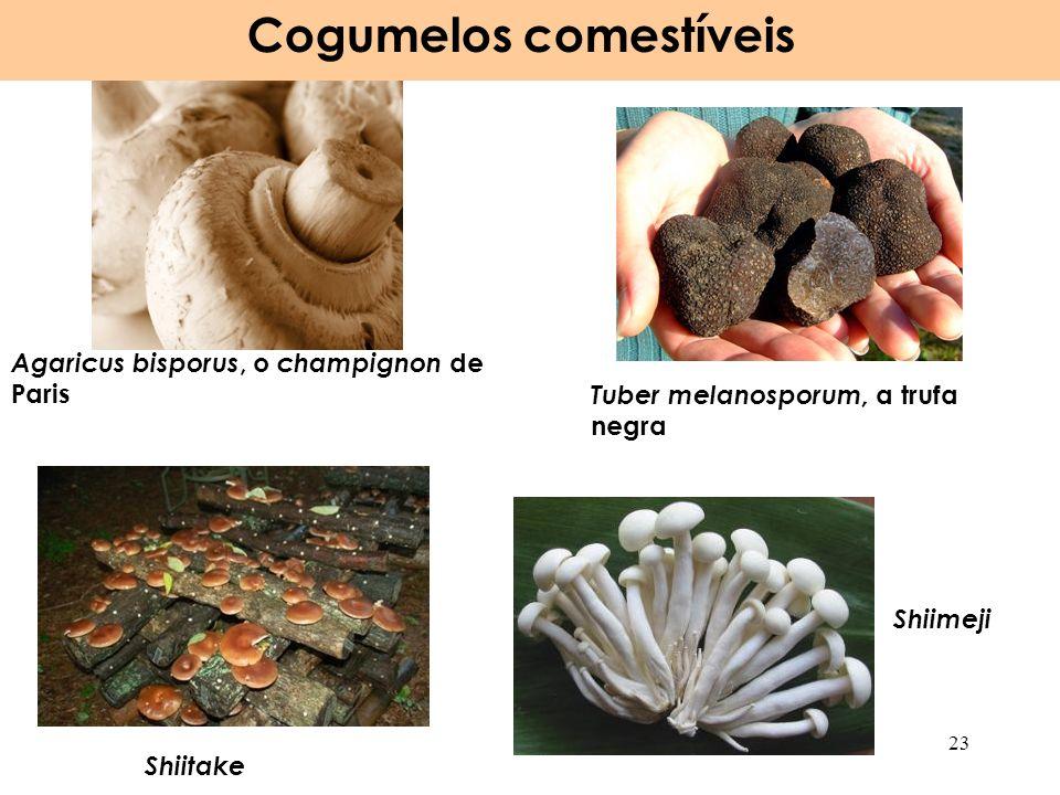 Agaricus bisporus, o champignon de Paris Tuber melanosporum, a trufa negra Cogumelos comestíveis 23 Shiitake Shiimeji