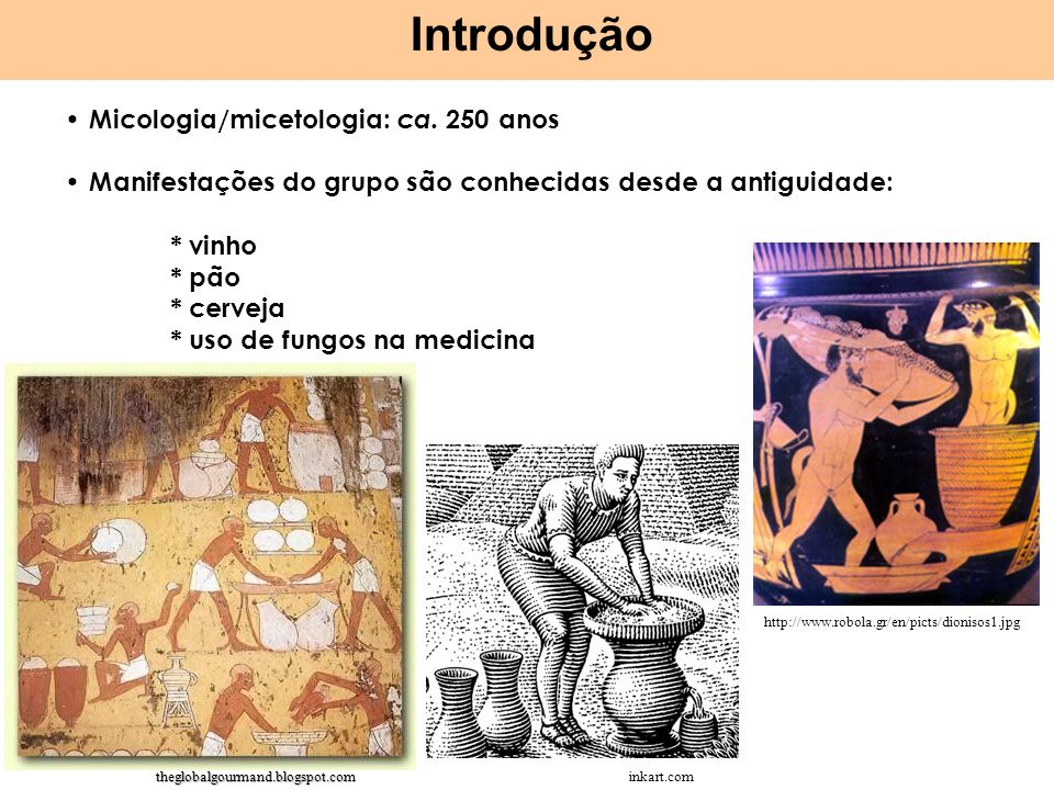 Micologia/micetologia: ca. 250 anos Manifestações do grupo são conhecidas desde a antiguidade: * vinho * pão * cerveja * uso de fungos na medicina Int