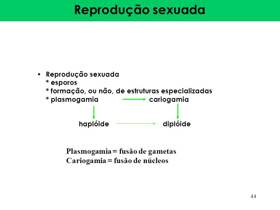 Reprodução sexuada * esporos * formação, ou não, de estruturas especializadas * plasmogamiacariogamia haplóide diplóide 44 Plasmogamia = fusão de game