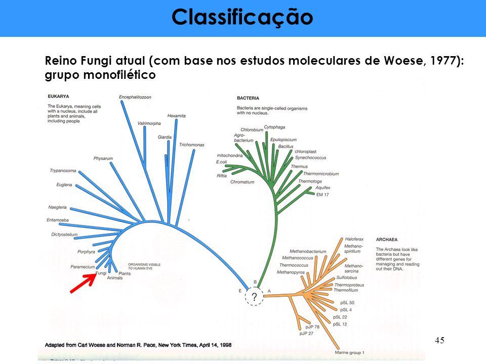 Classificação Reino Fungi atual (com base nos estudos moleculares de Woese, 1977): grupo monofilético 45