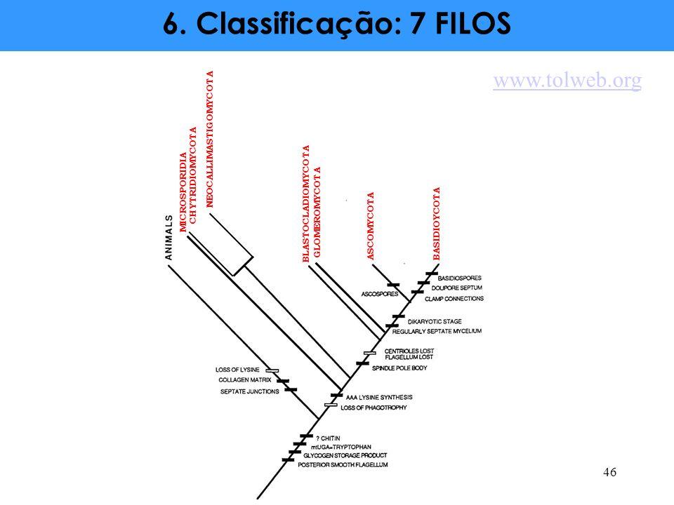 46 CHYTRIDIOMYCOTA NEOCALLIMASTIGOMYCOTA MICROSPORIDIA BLASTOCLADIOMYCOTA GLOMEROMYCOTA ASCOMYCOTA BASIDIOYCOTA 6. Classificação: 7 FILOS www.tolweb.o
